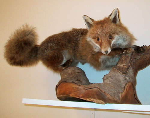 [Image: taxidermie1.jpg]