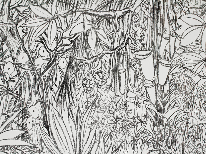 St phanie nava documents d 39 artistes paca - Dessin vegetation ...